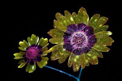Fleur Nuit Lumière 2
