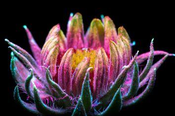 Fleur Nuit Lumière