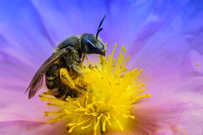 macro-abeille-fleur2