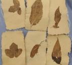 Papier de plantes incrusté dentelle